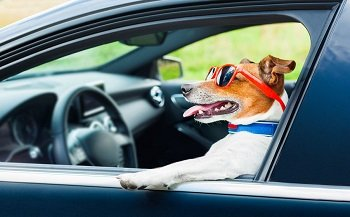 Kurse Führerscheine
